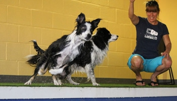A Loyal Companion | Canine Swimming | Exercise & Lessons