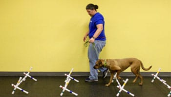 A Loyal Companion | Canine Fitness | Dog Gym