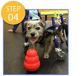 A Loyal Companion | Canine Mobility Equipment | Orthotics | Carts