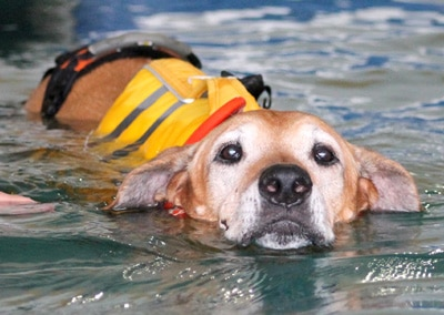 A Loyal Companion | Canine Mobility & Swim Center