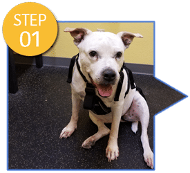 A Loyal Companion | Canine Mobility & Swim Center | DVM Refer a Case