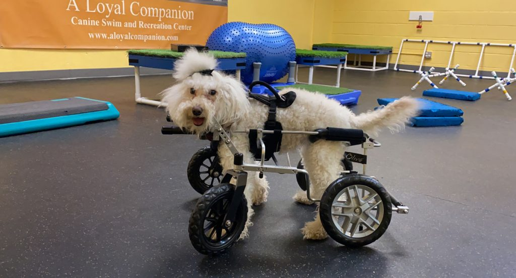 A Loyal Companion | Canine Mobility Solutions | Refer a Case