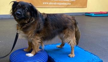 A Loyal Companion | Canine Fitness | 4-pack savings