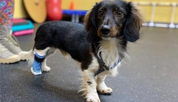 A Loyal Companion | Canine Mobility Equipment | Orthotics | Carts