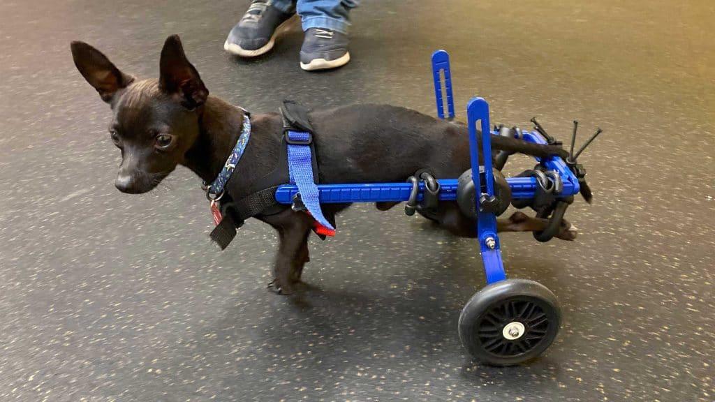Adjustable Wheelchairs